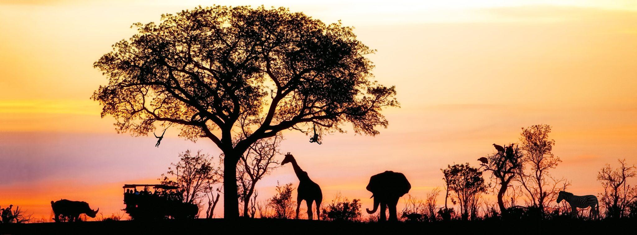 Afrique du Sud – 10 expériences récréatives